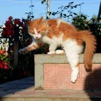 Акробатический этюд на свежем воздухе :: BoykoOD