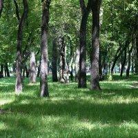 В парке :: Юрий Оржеховский