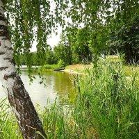 Здесь можно купаться :: Маргарита Батырева