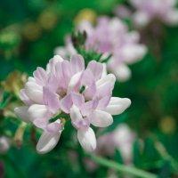цветы полевые :: Татьяна