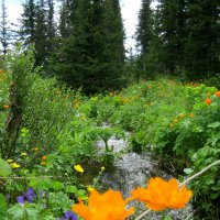 Весна в Ергаках :: Любовь Иванова