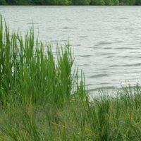 Малаховское  озеро :: Олег Пучков