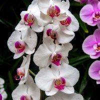 Цветы в Лора парке :: Witalij Loewin