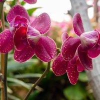 Цветы в Лора парке, Тенерифа :: Witalij Loewin