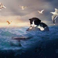Сюрреалистическую сцену с котёнком на море (в Фотошоп) :: Наталья (ShadeNataly) Мельник