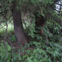 Таинственный лес :: Валерий Конев