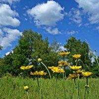 """""""...Я впитаю в себя запах трав и цветов... Ароматы лесов... И бездонность прекрасного неба!... :: Galina Dzubina"""