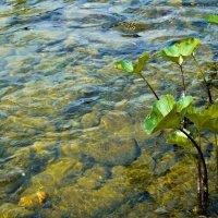 Чистейшая вода :: Rina .