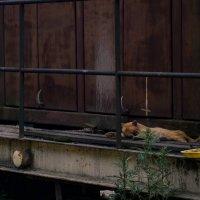 Кот спит, служба идёт :: Дмитрий Коноплев