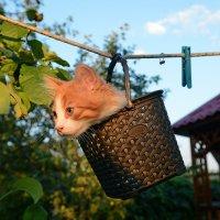 И че у вас тут с котами происходит..? :: Александр Бойко