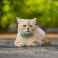 kitty :: Trage
