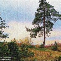СОСЕНКА :: Валерий Викторович РОГАНОВ-АРЫССКИЙ