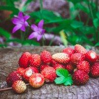 Июньская ягода :: Андрей Куприянов