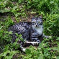 Отдых под сенью деревьев в жаркий полдень. :: Анатолий. Chesnavik.
