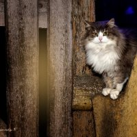 Пушистый страж двора! :: Вячеслав