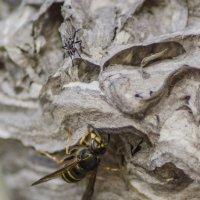 Осы и муха :: Константин Сафронов