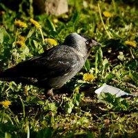 раздумие :: linnud