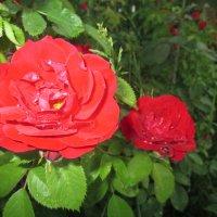 Вдыхая розы аромат... :: Valentina