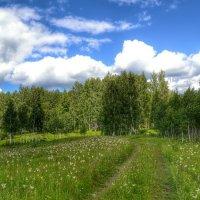 В лес за грибами :: Милешкин Владимир Алексеевич