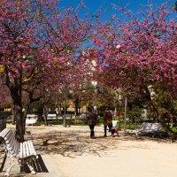 Весна в городе Cádiz :: Денис Шамов