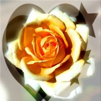 Роза. :: Чария Зоя