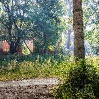 Утро в старинном парке :: Владимир Буравкин
