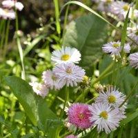 цветы :: Михаил Радин