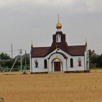 Средь поля пшеницы... :: Владимир