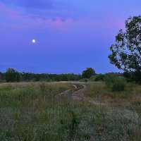 Лунная  ночь. :: Валера39 Василевский.