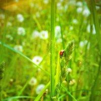 кусочек лета :: Zhanna Abramova