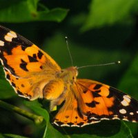 Бабочка :: Cain Amberskii