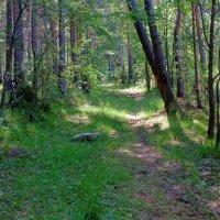 Тропинка в сказочный лес :: Анатолий Иргл