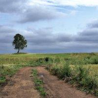Одинокое дерево :: Валерий Талашов