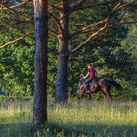 Меж деревьев :: Сергей Цветков