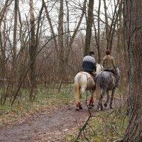 Пасмурный день в  апрельском лесу :: София