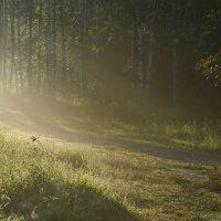 Утренний свет.... :: Юрий Цыплятников