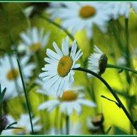 Солнце,цветы,летаааааааа!!! :: Владимир Гилясев