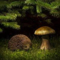 Ёжик и гриб :: Алексей Строганов