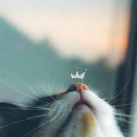 Любимый нос :: Юлия Кутовая