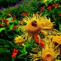 Пчела на цветке :: Nina Yudicheva