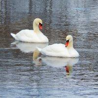 красивая пара :: linnud