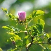 солнечным летним днём... #3 :: Андрей Вестмит