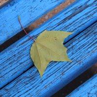 Осень :: Вера Минаева