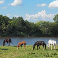 Ходят кони над рекою :: Сергей Цветков