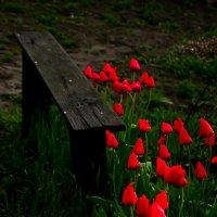 Весна :: Анастасия