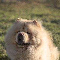 Вальяжный пес в лучах заката :: Тата Казакова
