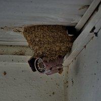 гнездо ласточки. :: Murat Bukaev