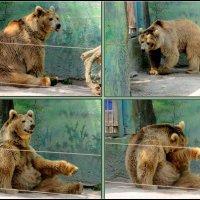 Лето в ростовском зоопарке :: Нина Бутко