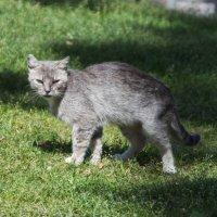 Монастырская кошка :: marmorozov Морозова