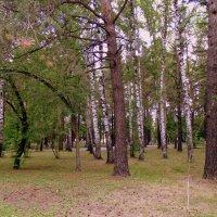 В старом парке. :: Мила Бовкун